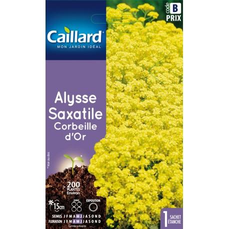 Graines de Corbeille d'or / Alysse saxatile