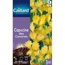 Graines de Capucine des Canaries