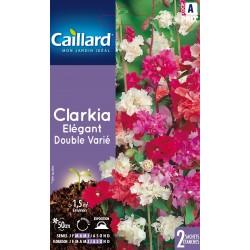 Graines de Clarkie élégante / Clarkia élégant - double varié