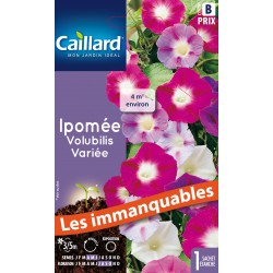 Graines d'Ipomée / Volubilis - variée