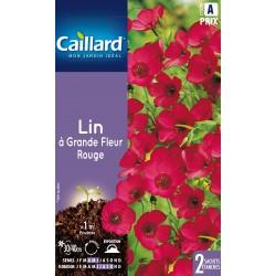 Graines de Lin à grandes fleurs - rouge