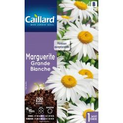 Graines de Marguerite d'été / Marguerite grande - blanche