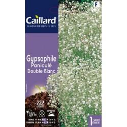 Graines de Gypsophile paniculé - double blanc